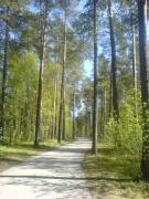 Oulu paths