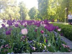 Stadsparken in Uppsala