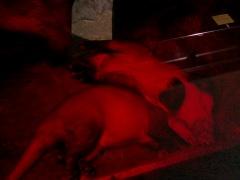 Philadelphia Zoo: Aardvark