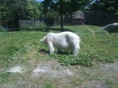 Philadelphia Zoo: Polar Bear