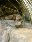 Philadelphia Zoo: Snake